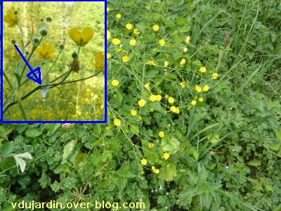 ATC calendrier 2011, mai, cueillette des fleurs