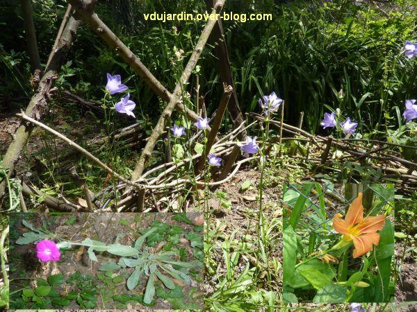 Mon jardin le 4 juin 2011, 2, quelques fleurs, hémérocalles, campanules et lychnis