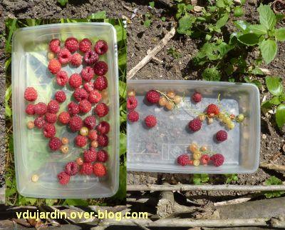 Mon jardin le 4 juin 2011, 1, des groseilles et des framboises