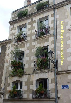Défi photo, jardins, 3, Poitiers, rue de la Cathédrale