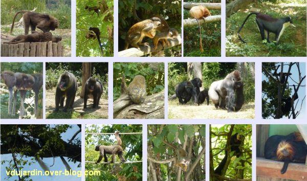 La vallée des singes à Romagne, juillet 2011, 15 autres images