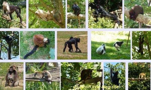 La vallée des singes à Romagne, juillet 2011, 15 images
