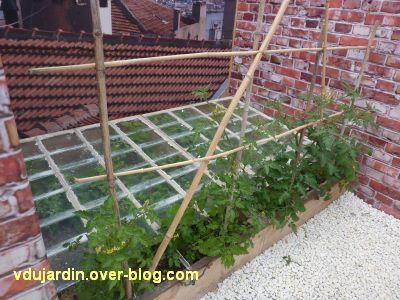 Chaumont-sur-Loire, festival 2011, le jardin 16, 5, un chassis et des tomates