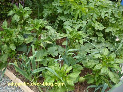 Chaumont-sur-Loire, festival 2011, le jardin 15, 3, de beaux légumes