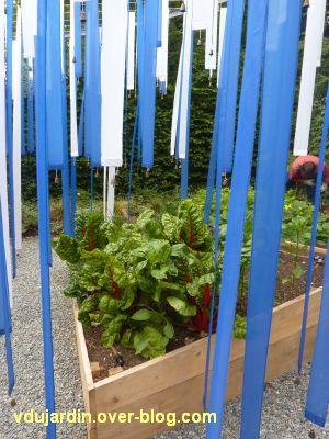 Chaumont-sur-Loire, festival 2011, le jardin 15, 5, des bettes à cotes rouges