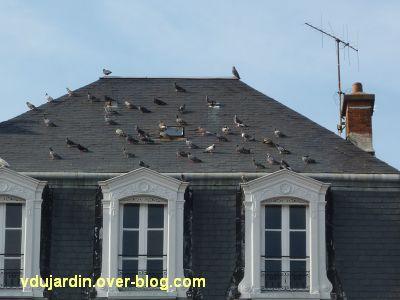 Des pigeons place d'Armes à Poitiers le 21 juin 2011