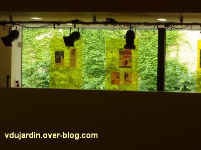 Poitiers, le théâtre et auditorium,3, la vigne vierge depuis la vitre du foyer