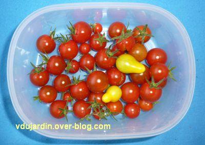 Mon jardin en août 2011, 1, récolte sur le balcon, tomates cerises et poires