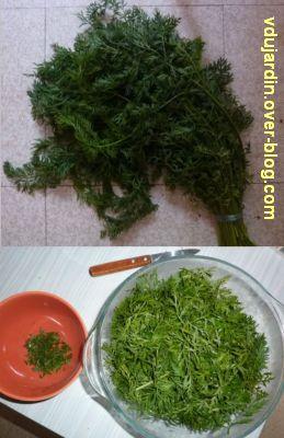 Cuisine mélange de saveurs, 1, fanes de carottes