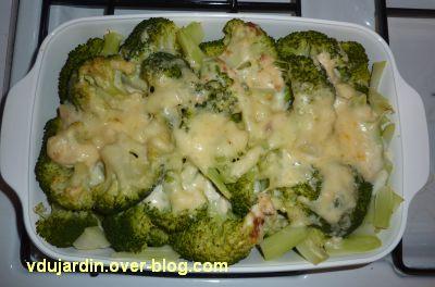 Cuisine mélange de saveurs, 4, grattin de brocolis