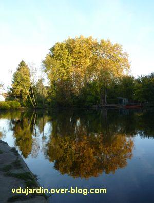 Mon jardin fin octobre 2011, 4, arbres d'automne... sur la rive opposée