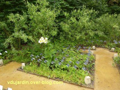 Chaumont-sur-Loire, festival 2011, le jardin 12, 2, un carré en hommage aux plantes disparues