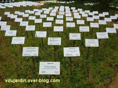 Chaumont-sur-Loire, festival 2011, le jardin 12, 3, la face blanche des étiquettes