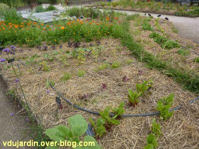 Chaumont-Sur-Loire 2011, le jardin expérimental, 10, encore du paillage