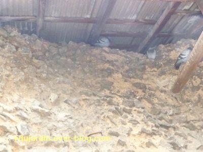 Poitiers, 26 février 2011, défi APN, des nids, 01, pigeaons de l'amphithéâtre