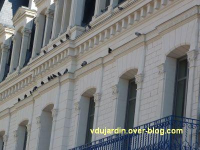 Poitiers, coeur d'agglo, 3 septembre 2010, 17h15, vue 3, pigeons