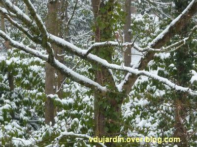 Défi photo, Poitiers en blanc, février 2012, 2, en blanc et vert de ma fenêtre