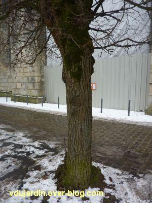 Défi photo, février 2012, des troncs, 5, un tronc d'arbre