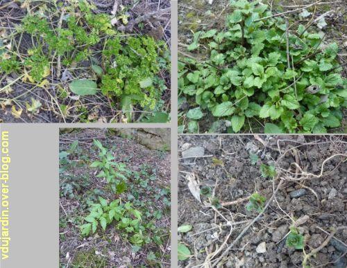 Mon jardin le 14 mars 2012, 4, au rayon fines herbes
