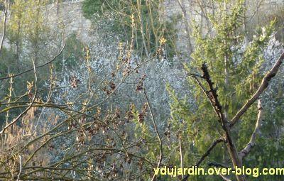Mon jardin le 14 mars 2012, 7, cerisiers sur le coteau