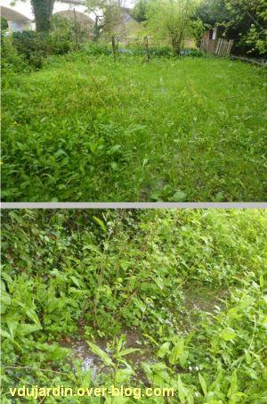 Crue du Clain le 30 avril 2012, 1, mon jardin sous 5 cm d'eau