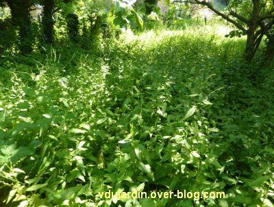 Mon jardin le 25 mai 2012, la jungle...