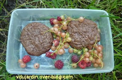 Mon jardin le 17 juin 2012, 5, le goûter avec groseilles et framboises