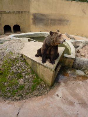 Animaux du Bois-de-Saint-Pierre près de Poitiers : ours