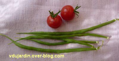Mon balcon en juillet, 2, première récolte mi juillet, haricots et tomates cerises