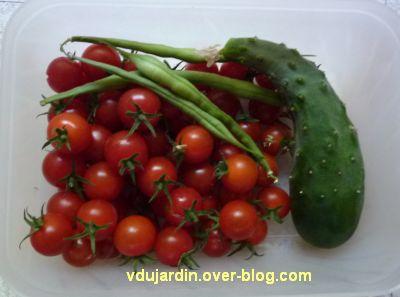 Sur mon balcon début août, des tomates cerises, un gros cornichon et quelques haricots