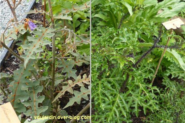 Chaumont-sur-Loire, festival des jardins 2012, jardin 07, 3, des solanacées qui piquent