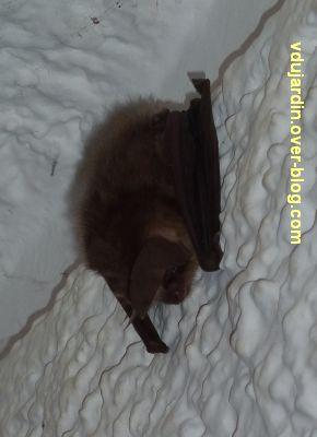 Une chauve-souris dans le tunnel de ma résidence, 2