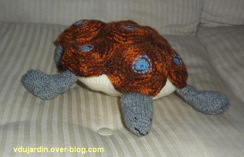 Une tortue au tricot : vue de face