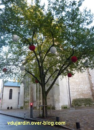 Poitiers, décorations de noël début novembre, des boules dans des arbres encore verts...