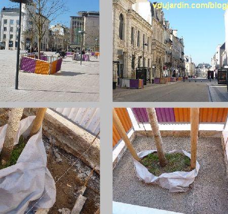 Poitiers, février 2013, travaux sur les arbres