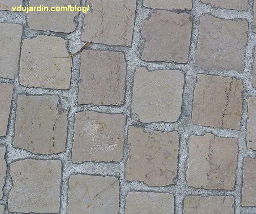 Poitiers, pavés rue Carnot, exemple de fissures