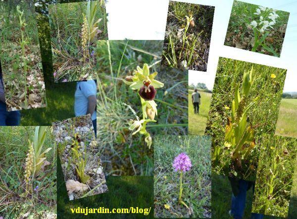 Orchidées trouvées à Civaux début mai 2010