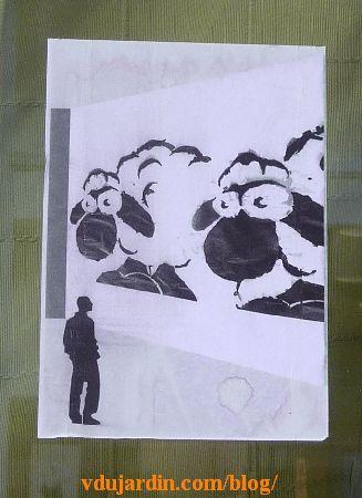 Poitiers, un homme regarde deux moutons en vitrine