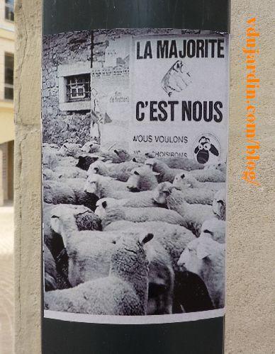 Moutons poitevins devant une bergerie, la majorité chez nous