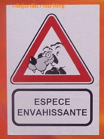 Poitiers, mouton espèce envahissante
