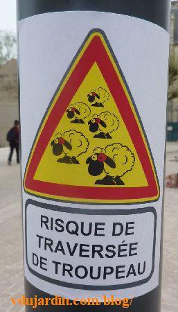 Poitiers, attention à la traversée de moutons