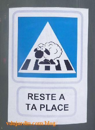 Poitiers, mouton sur un passage protégé